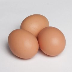 Fertilized-eggs.jpg