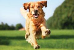 Healthy-Dog-2.jpg