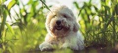 Healthy-Dog.jpg